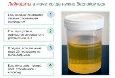 Лейкоциты 6-8 в моче у беременных